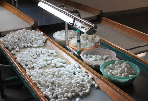Производство шелковой нити