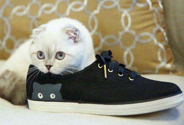Кот в кедах