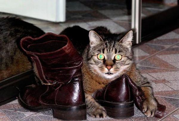 Кот на ботинках