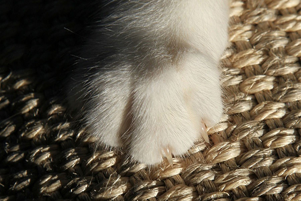 Лапка кота на когтеточке из сизаля