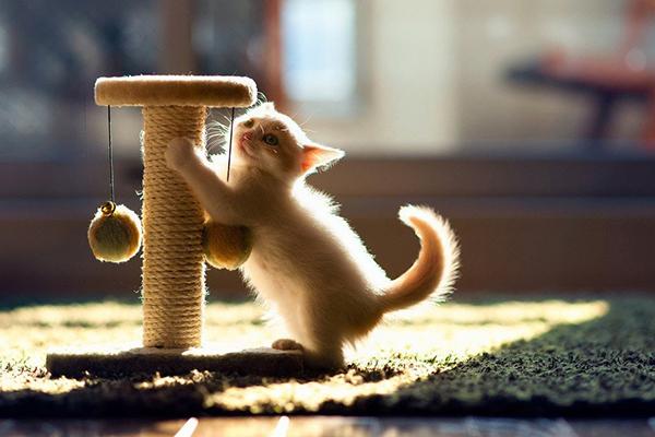 Котенок и джутовая когтеточка