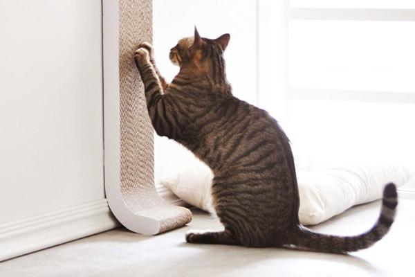 Кот дерет когтеточку