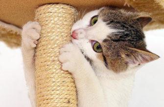 Кот грызет когтеточку