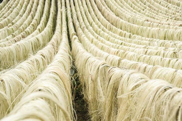 Сырье для изготовления сизаля